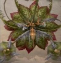 Rafflesia FFXII.jpg
