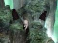 FFVII Sephiroth & Clones.jpg