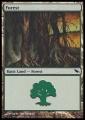 Forest1 SHM.jpg