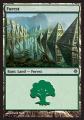 Forest2 ROE.jpg