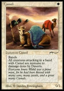 Camel AN.jpg