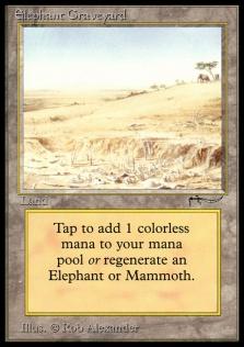 Elephant Graveyard AN.jpg