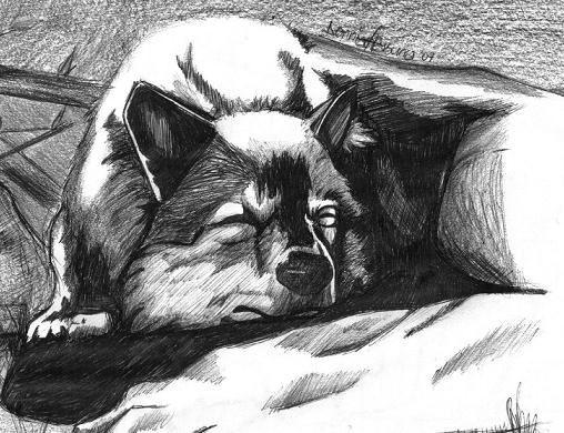 """Husky"" by DenniseA"