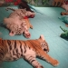 Sleeping tiger cubs