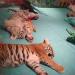 Sleeping tiger cubs