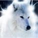Sonstige Wolfsbilder