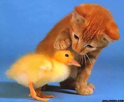 Chick   Kitty = <3