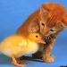 Chick   Kitty = <3
