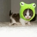 It's a kitty and a frog!