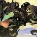 Kyan Dog - Oriental Wallpaper 1080p