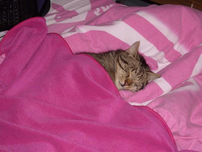 Tiffy's Cat Sleeping in Bed