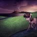 Twilight Walking in a Stream