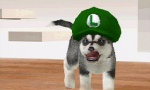 Nintendogs: Labrador and Friends screenshot 16
