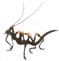 FFX2 Insect Matriarch.jpg